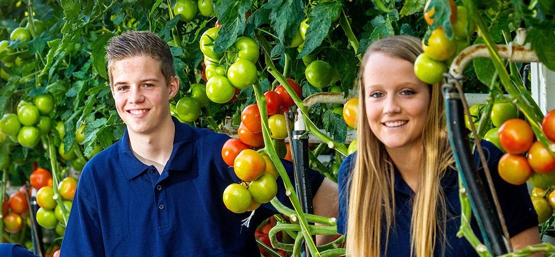 scholierenportaal-home - Kwekerij GreenValley - De Lier - Tomaten