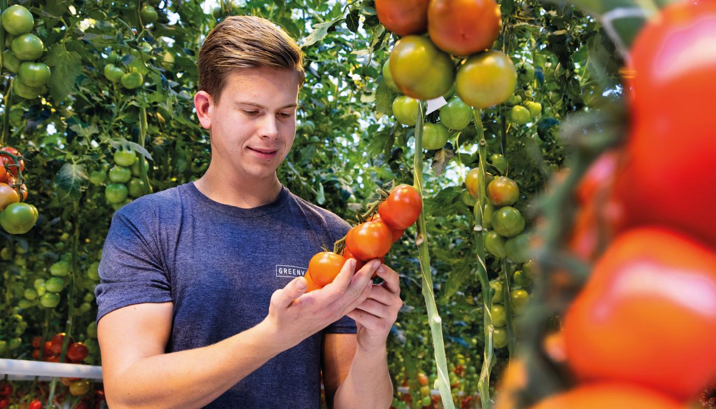 Tomaten Kwekerij GreenValley - De Lier 1400x800