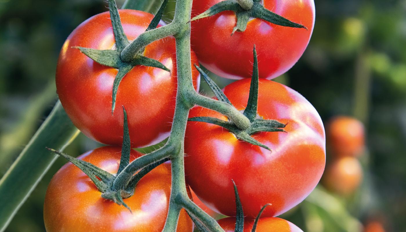 Tomaten Kwekerij GreenValley - Recepten met Tomaten - De Lier 1400x800
